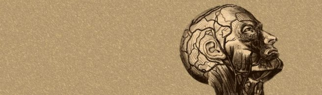 cropped-anatomy-of-the-brain-hd-wallpaper.jpg